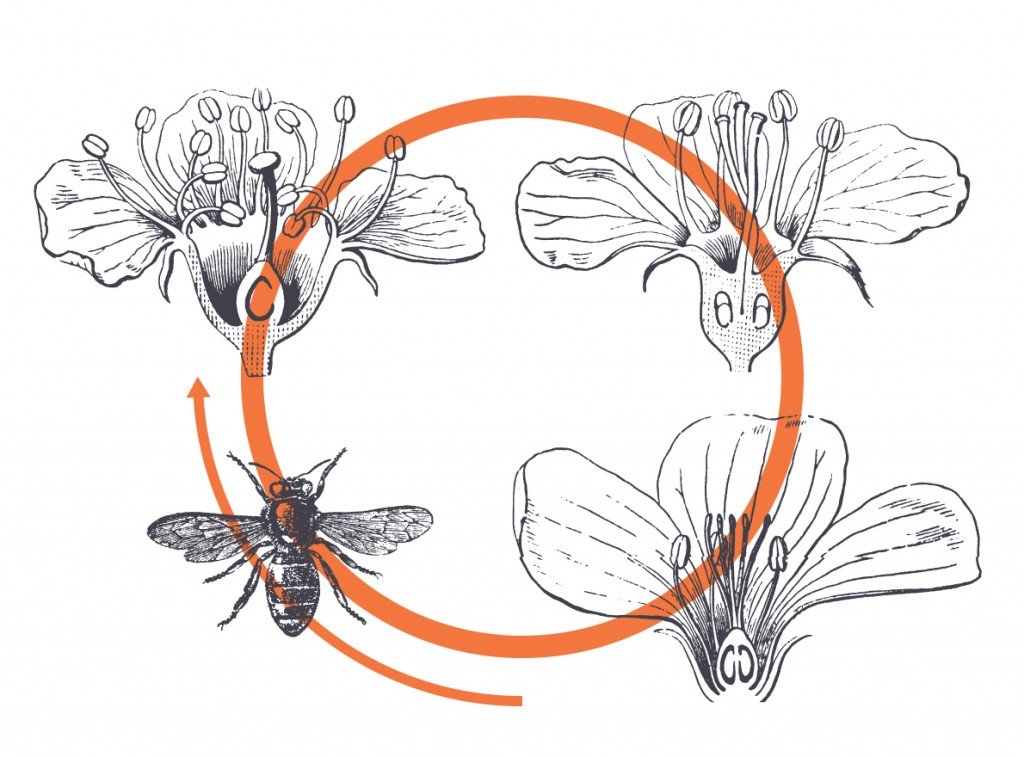 Prosperity and Sisterhood and Honeybees
