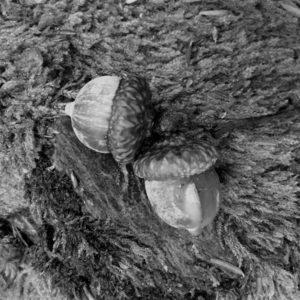acorn-lg-file-version-2